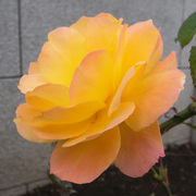 Rimg14663_2