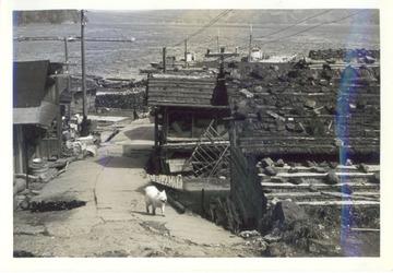 195511jpg
