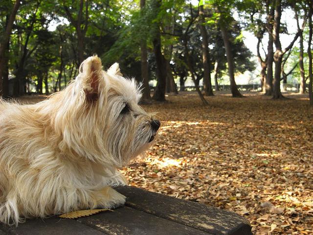 2009 砧公園の秋